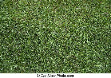 green grass background - green grass