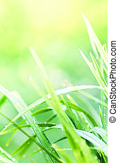 Green grass background macro. Abstract natural background with b