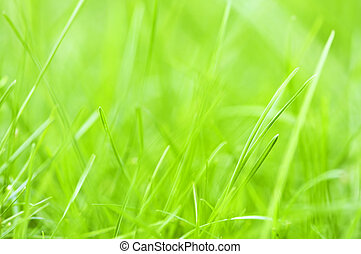 Green grass background - Natural background of green grass ...