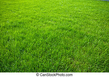 green grass background - new spring green grass for design