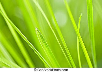 Green grass background - Natural background of green grass...