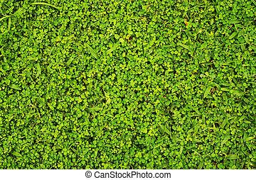 green grass background