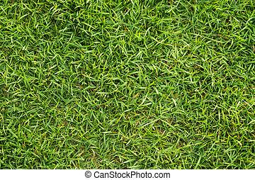 Green grass background.