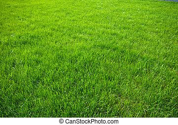 green grass background - new spring green grass for design