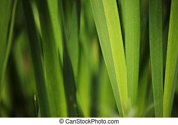 Green grass background. Macro close-up, shallow DOF.
