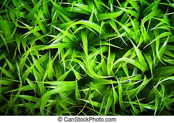 Green Grass Background - Close-up of green blades of grass.