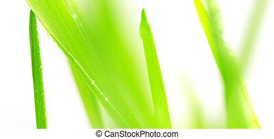 Green grass background - Green background, grass defocused...