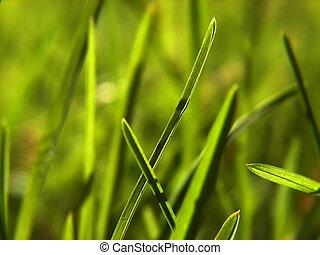 green grass background - green grass bacground in fresh...