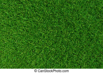 Green grass. background texture.