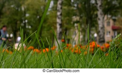 Green grass background. Unrecognized people walking in park....