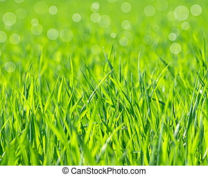 grass  - green grass background with selective focus