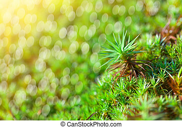 green grass background with sun beam and bright boukeh