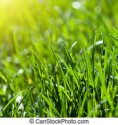 green grass background with sun beam