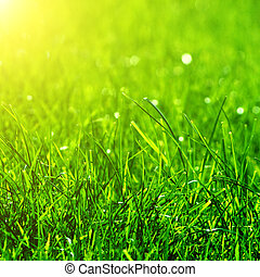 green grass background with sun beam