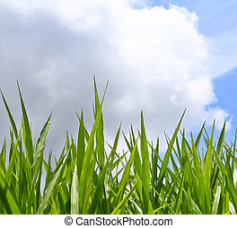 green grass backgrounds
