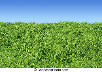 Green grass bank.