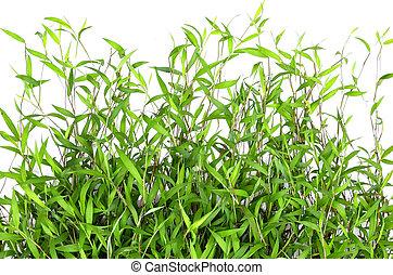 Green grass blade on white background