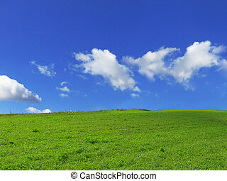 grass - green grass, blue sky