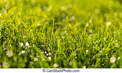 Green Grass Bokeh Background with Water Drops in the Morning