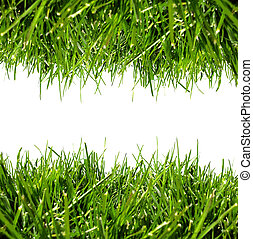 Green grass border on a white background with clear space for text