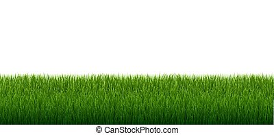 Green Grass Border With Isolated White Background