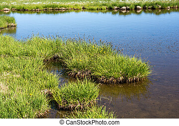 Green grass by the pond