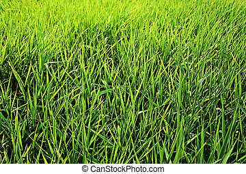 green grass close up background