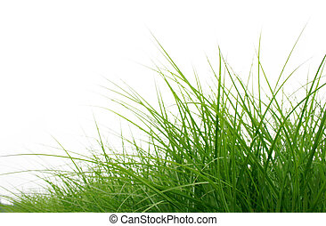 green grass close up isolated on white