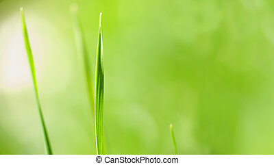 green grass close up with blurry background