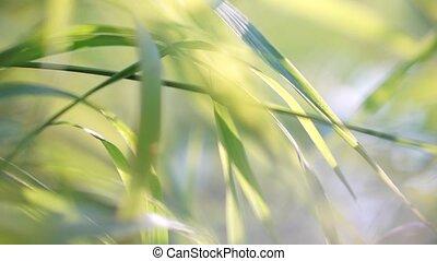 Green grass closeup shot with shallow focus