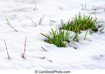 green grass covered by snow