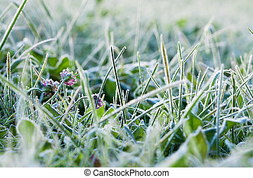 green grass covered with hoarfrost - abstract background...