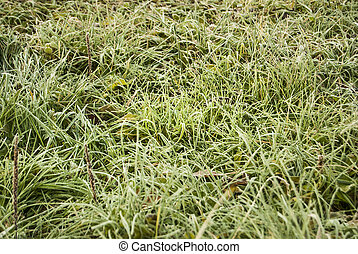 Green grass covered with white hoarfrost, close-up