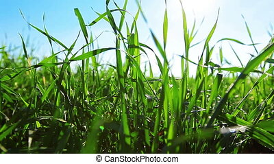 green grass dolly shot