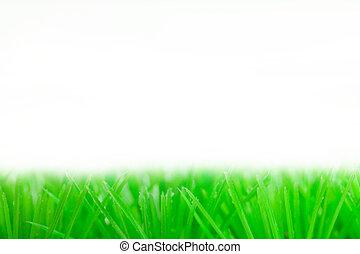 green grass  - Fresh spring green grass