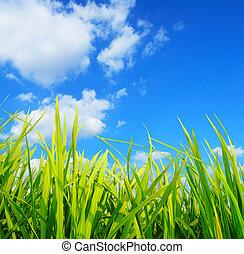 green grass, environmental protection concept