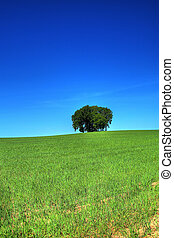 green grass field and a bunch of trees #2