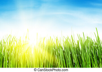Green grass field and blue sky with sun