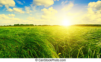 Green grass field and forest under sunset sun on blue sky.