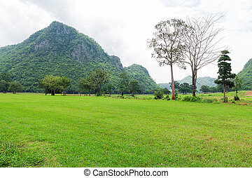Green grass field and mountains background