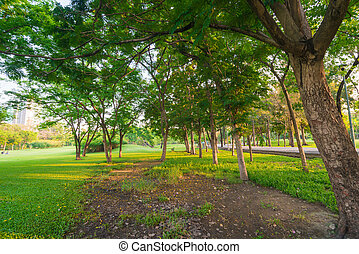 Green grass field and tree in city park