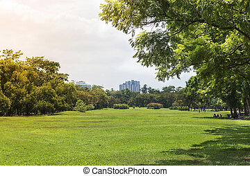 green grass field and trees in park