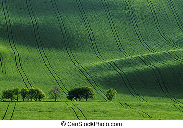 Green grass field background - Rolling sunny hills with ...