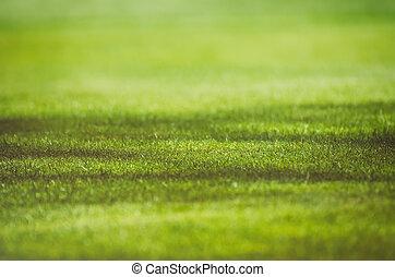 Green grass field background - Sunny green grass field ...