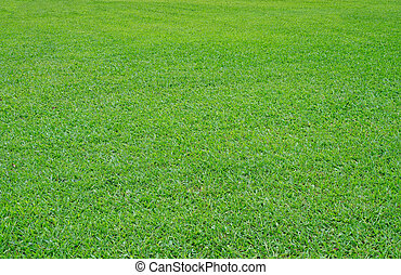 Green grass field. From close distance to further away.