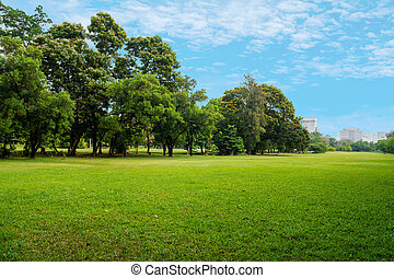 green grass field in big city park