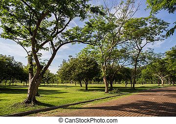 green grass field in park
