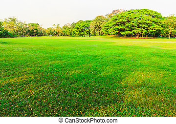 green grass field in the park