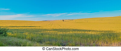 green grass field landscape under blue sky in spring with clouds in the background
