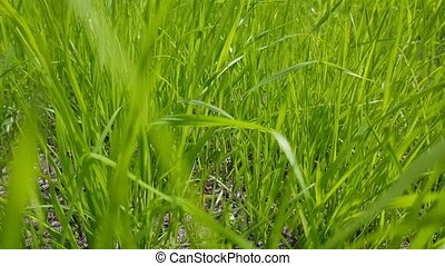 Green grass field. Nature concept